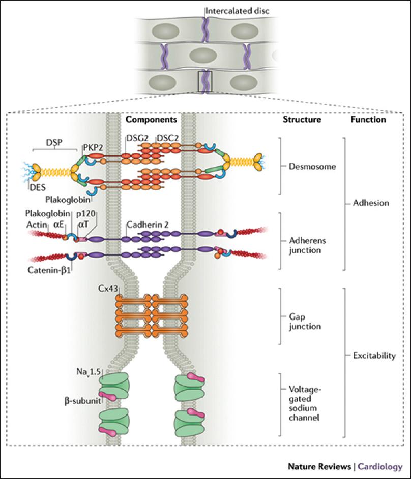 Molecular mediators, characterization of signaling pathways
