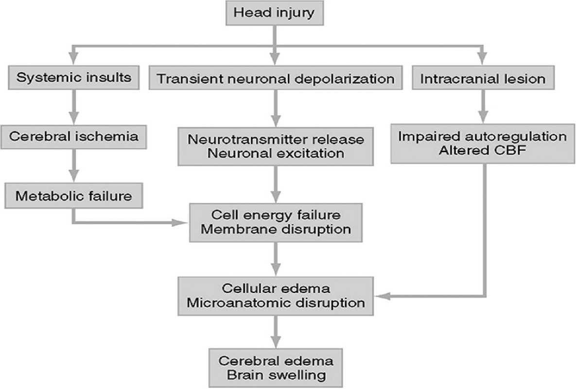 Figure 2: Sequential events following traumatic brain injury<sup>[13]</sup>